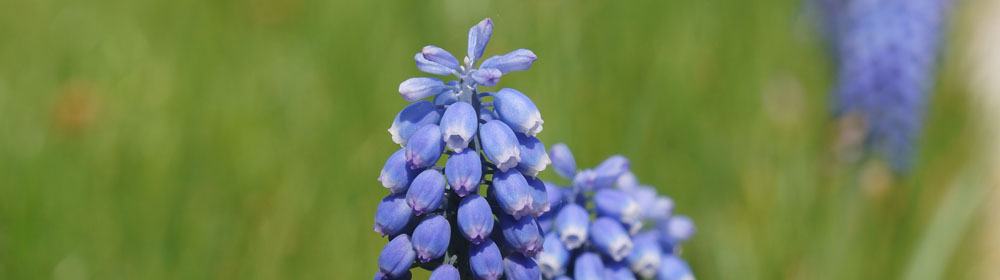 fruehlingsblumen_DSC02213